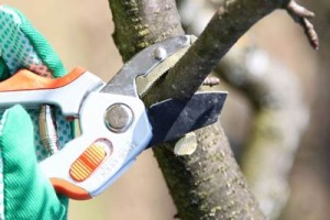 Harford County tree pruning