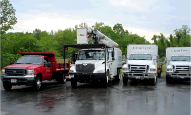 ClearTree's tree removal trucks